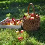 Simple Fall Apple Recipe Inspiration